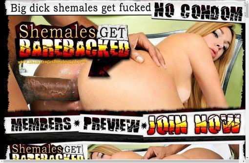 Shemales Get Barebacked